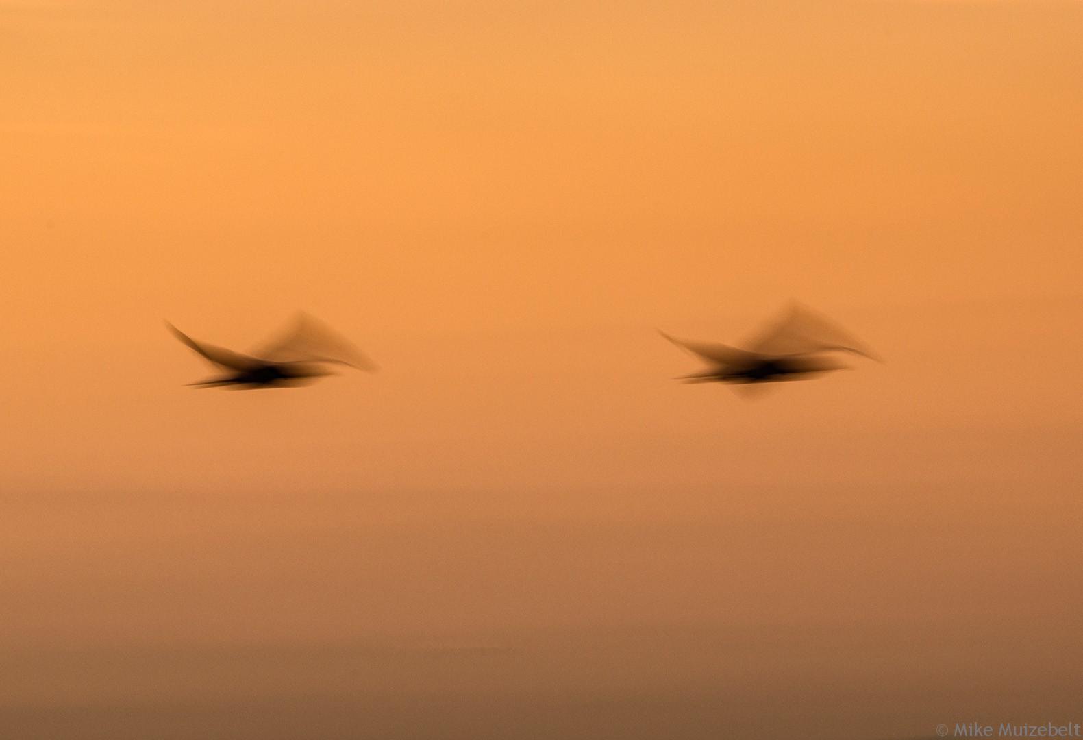 #wassenaar #sunset #beach #red #scheveningen #gulls #inmotion #flight