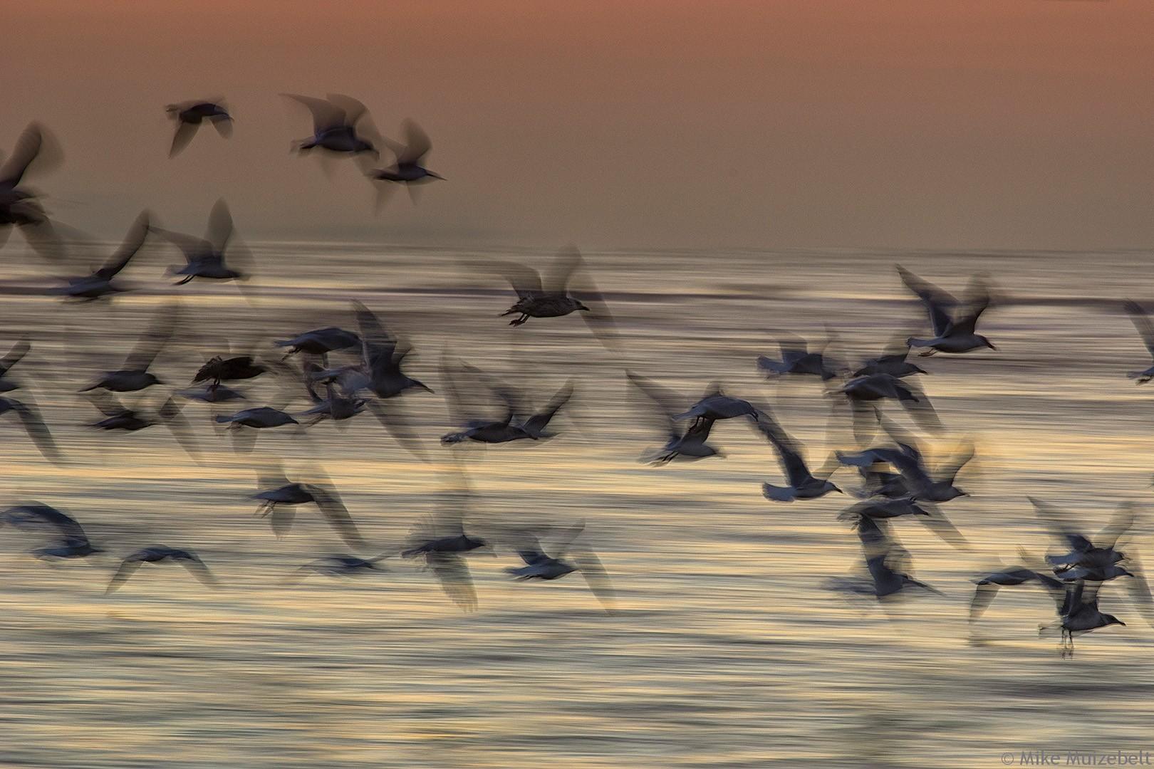 #wassenaar #sunset #beach #red #scheveningen #seagulls #wisher #motion #ocean